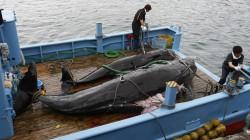 rakuten-whale[1]