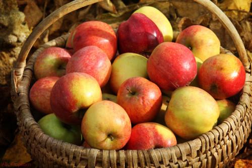 Apple Loses Latest Bid to Stall eBook Antitrust Trial Antitrust Appeal Apple