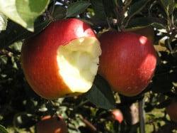 Publishers (Again) Object to Apple Antitrust Ruling Antitrust Apple Lawsuit Publishing