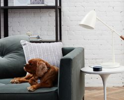 Two new Alexa-Enabled Devices from Amazon: Echo Dot and Amazon Tap Amazon
