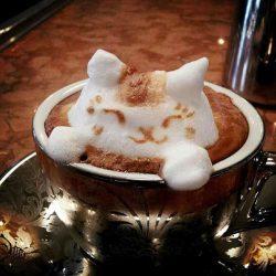 Morning Coffee - 9 December 2016 Morning Coffee